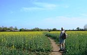 Guided walking holiday in England - Walk the Oxfordshire Way