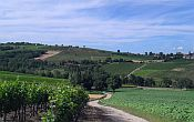 Tarn vineyards & villages