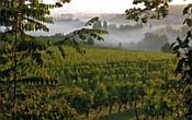 Vineyards Saussignac