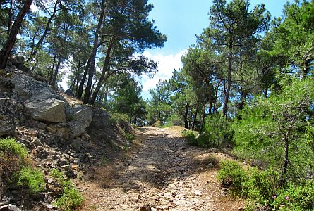 View on track leading into woodland on Lesbos