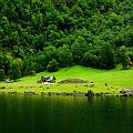 Beautiful green forest ending in the shore of a fjord