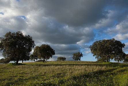 Fields with trees against a cloudy blue sky