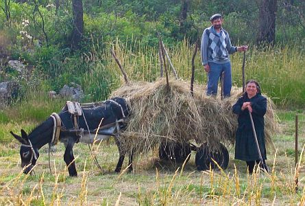 harvesting hay in rural portugal