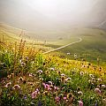 Wildflowers growing in a hilly, sundrenched meadow, view you can enjoy on your walking holidays in Europe