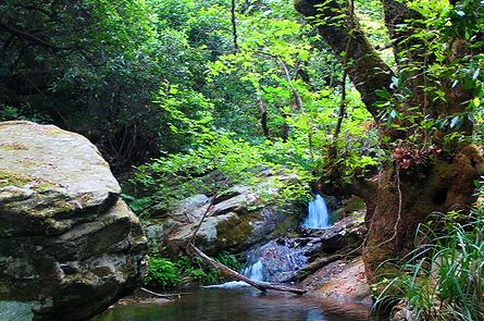 waterfall in lush woodlands in the Pelion mountains in Greece.