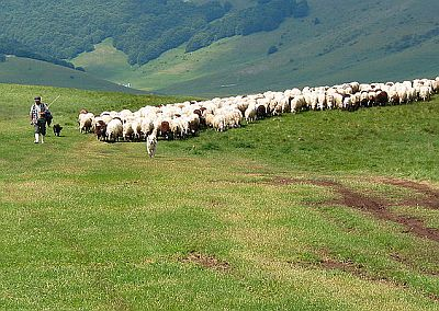 Rural scene in the Sibillini mountains - ashepherd with its flock - photo by Pizzodisevo cc-by-sa-2.0