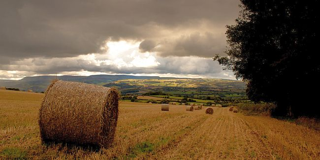 Hay bails in a Herefordshire landscape