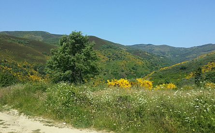View on landscape along the Camino de Santiago
