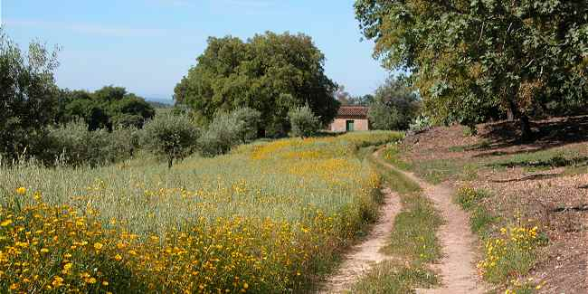 path in countryside in portugal