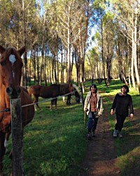 Two women walking along a forest track past some horses