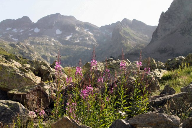 Landscape with mountains and flowers in the Mercantour National Park