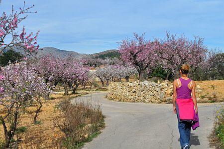 murla-walk-almond-blossom