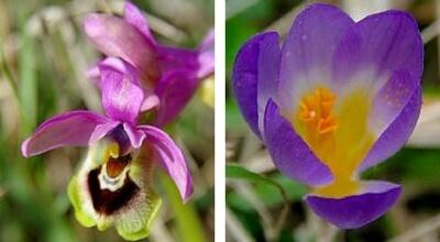 Wild flowers Arcadia