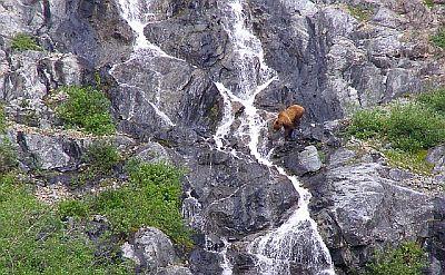 Norway-article-bear
