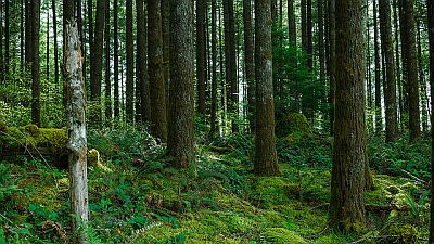 Norway-article-forest