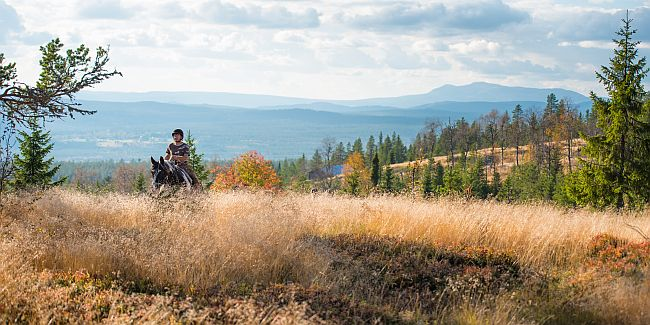 Rider on a trail in the Fulufjellet National Park