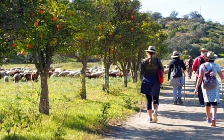 Walkers hiking through a rural landscape with sheep in the background