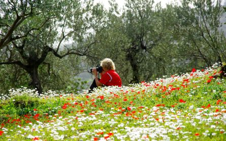 Person sitting in a wildflower meadow, looking through binoculars