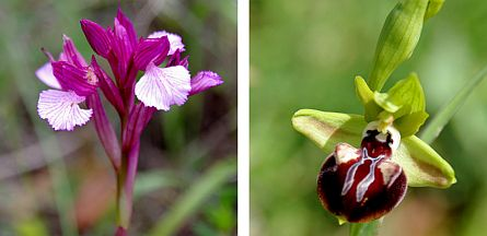Two species of orchids in bloom