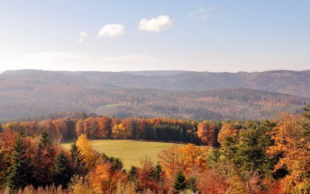 A field surrounded by autumn coloured forest