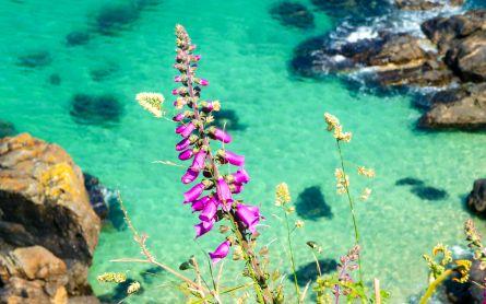 Wildflowers above an azure blue sea