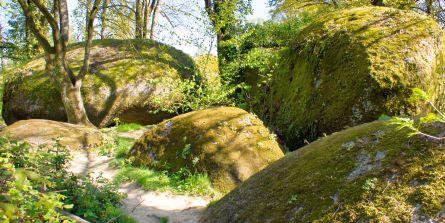 Trees growing among massive boulders