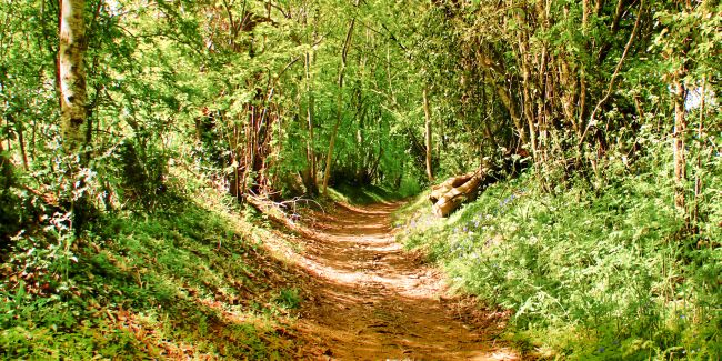 One of the paths leading away from le Moulin du Chemin, photographed on a glorious spring morning