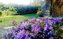 Purple flowers in the garden of Villatiffany