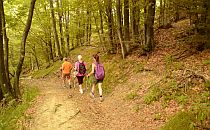 Group of walkers on a trail in a forest