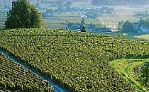 Vineyard in the Bordeaux in France