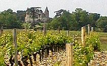 Vineyards with castle in the background