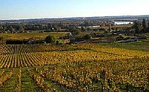 Vineyards in the Bordeaux
