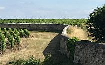 walking track past vineyards
