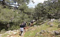 Hikers on a trail in a forest
