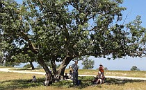 People sitting under a shade of a tree
