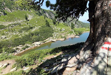 High altitude lake and pine tree in the Dachstein Mountains