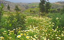 Beautiful wild flowers on Crete