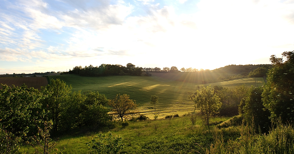 View of a green meadow during sunrise