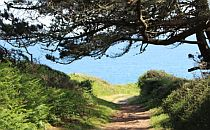 Walking path leading to the sea