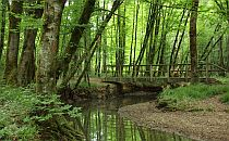woodland walk with bridge in western France