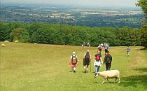 people walking downhill, a cow crossing the meadow behind them