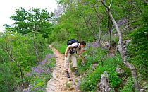 Person walking on a trail and admiring wild herbs
