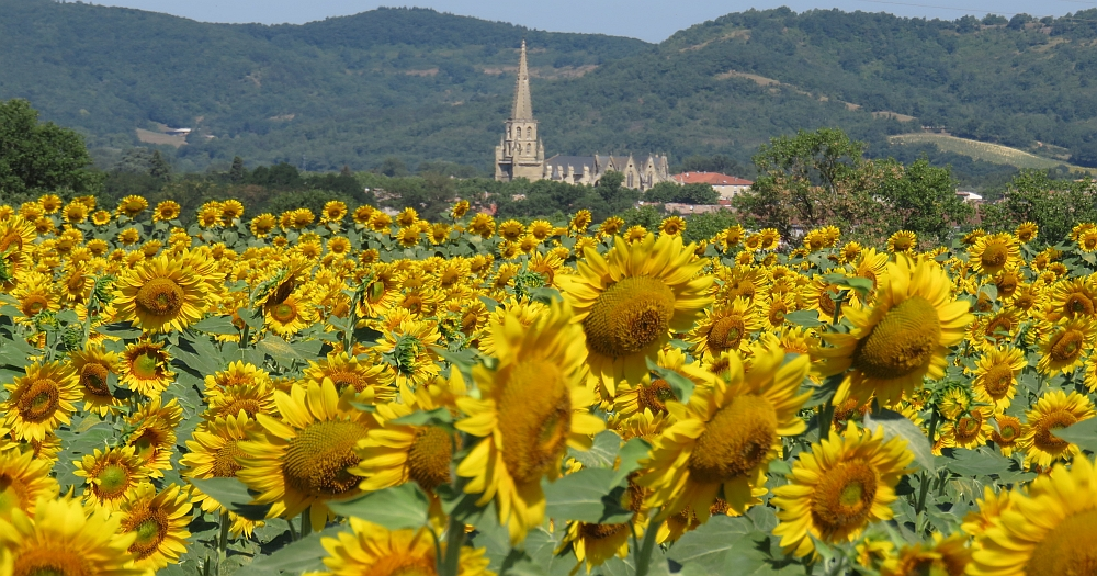 View of a church in France, a fiel of sunflowers in the front