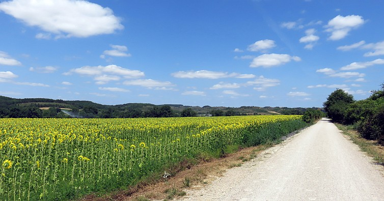 Sunny road along an arable field