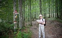 walker checking a map during a woodland walk