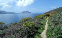 hiking path on a green hill along the coast