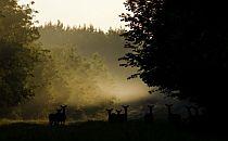 Hungarian wildlife`