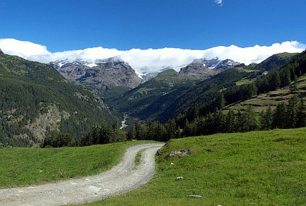 green meadows, forest and snowy peaks of the Italian Alps