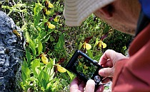 Man taking a photo of a wild orchid