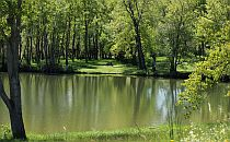 Quiet lake surrounded by green trees